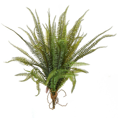 Plants Base Fern Boston YF 58cm