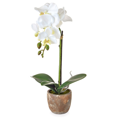 AN-Victoria Orchid White in Pot GS 40cm