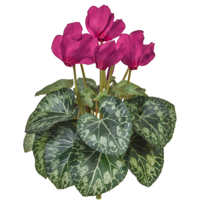Plants Flowering Cyclamen Purple 32cm