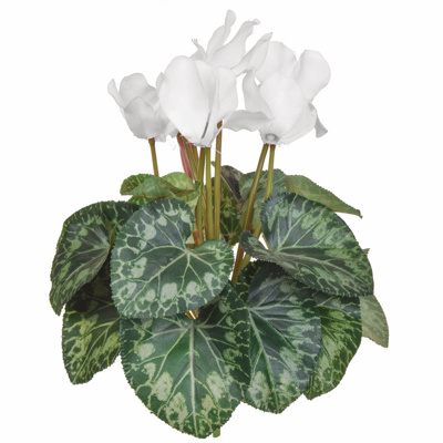 Plants Flowering Cyclamen White 32cm
