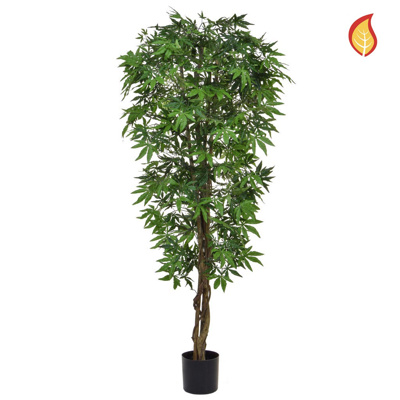 NTT Maple Japanese Green 150cm FR