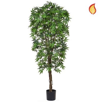 NTT Maple Japanese Green 180cm FR