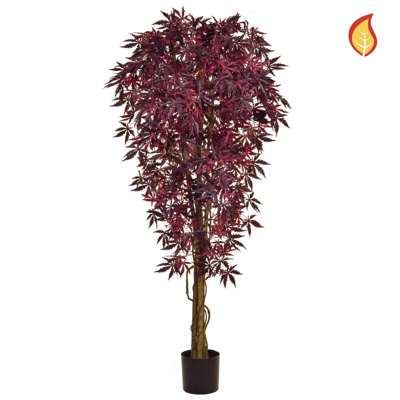 NTT Maple Japanese Burgundy 180cm FR
