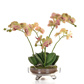 AN-Glass Orchid w/soil Pink GB 43cm